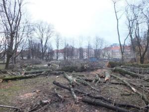 Ogród_Krasinskich